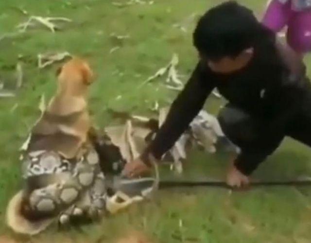 snake rescue