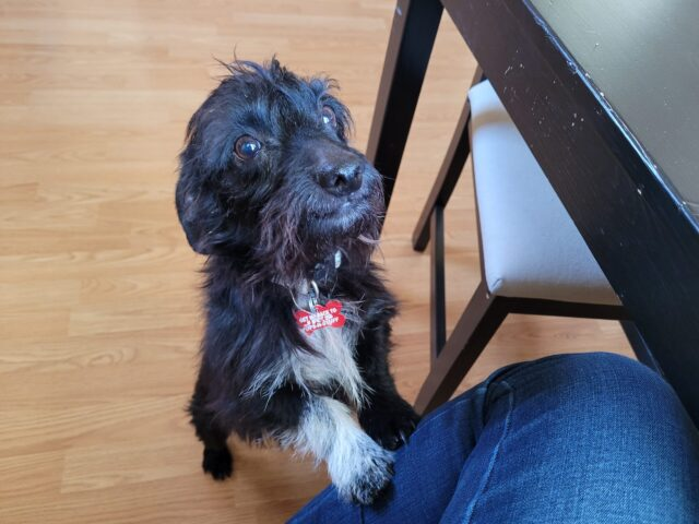 Scruffy foster dog