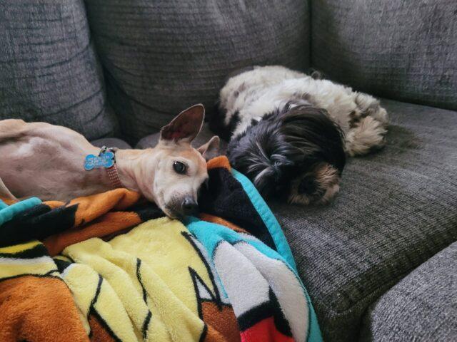 Rescue dogs snuggling