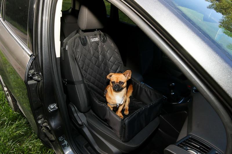 dog-in-car-seat
