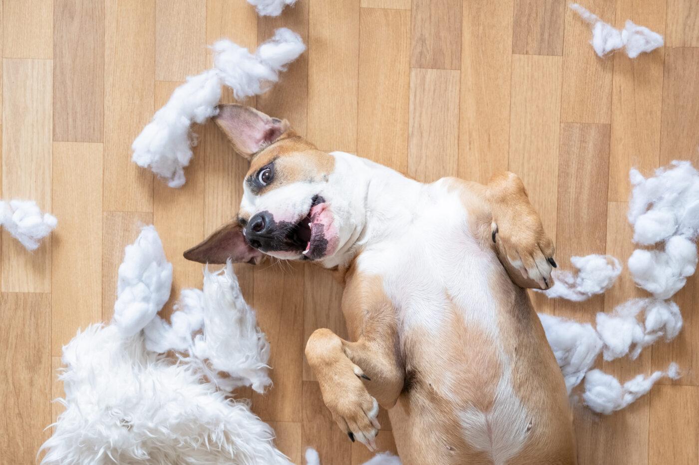 dog-chews-furniture