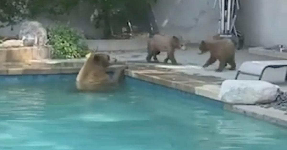 Backyard Bears Featured
