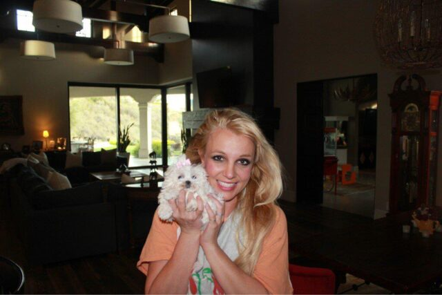 Britney and Maltese puppy