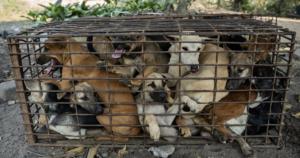 Dog slaughterhouse closes