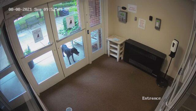 Dog arrives at work