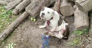 Dog chews off leg