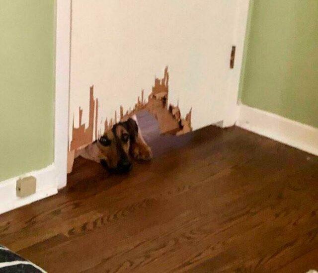 Dog chews through door