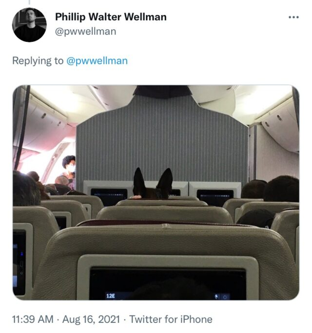 Dog in airplane seat