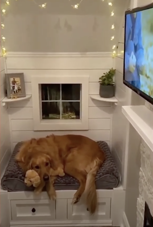 Dog in his room