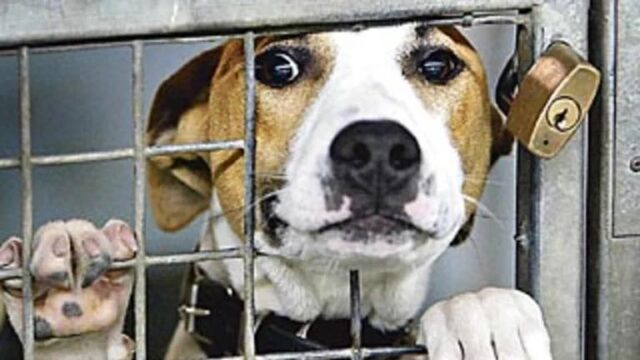 Dog trapped at shelter