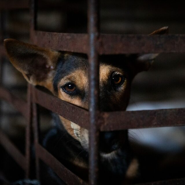 Dog trapped at slaughterrhouse