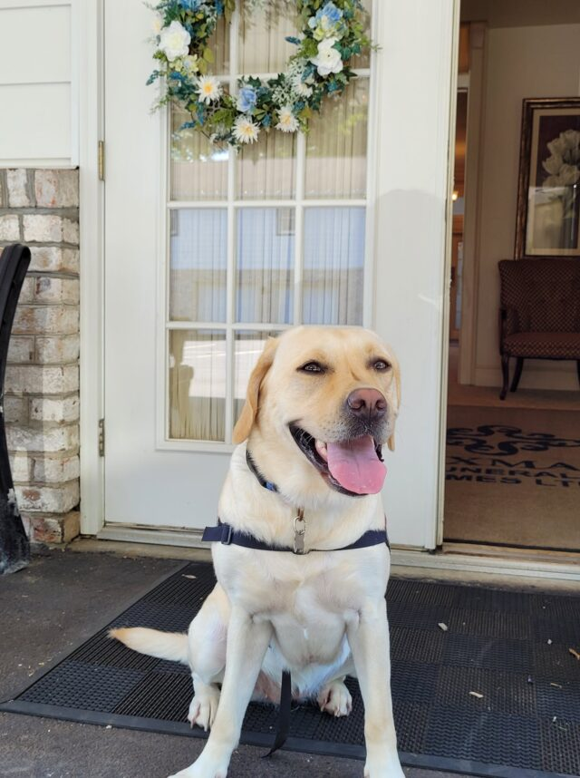 Dog works at funeral home