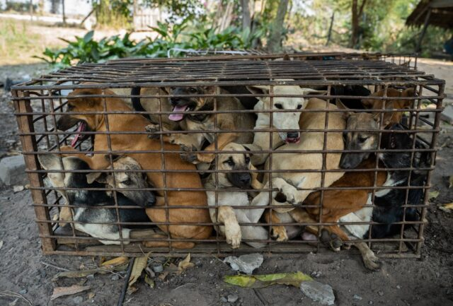 Dogs crammed into small cage