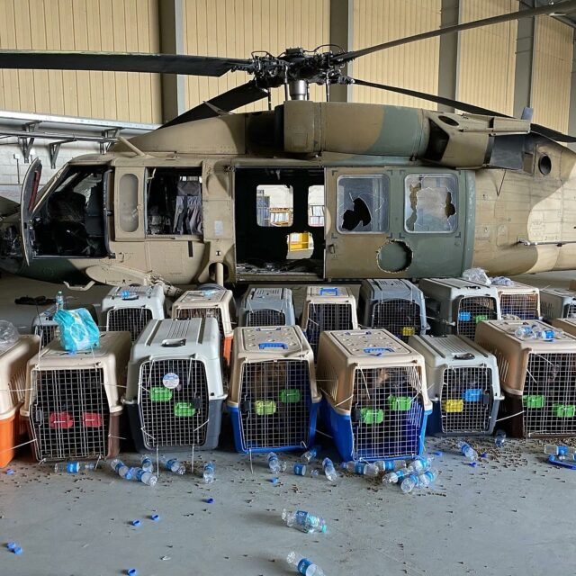 Dogs left in Afghanistan