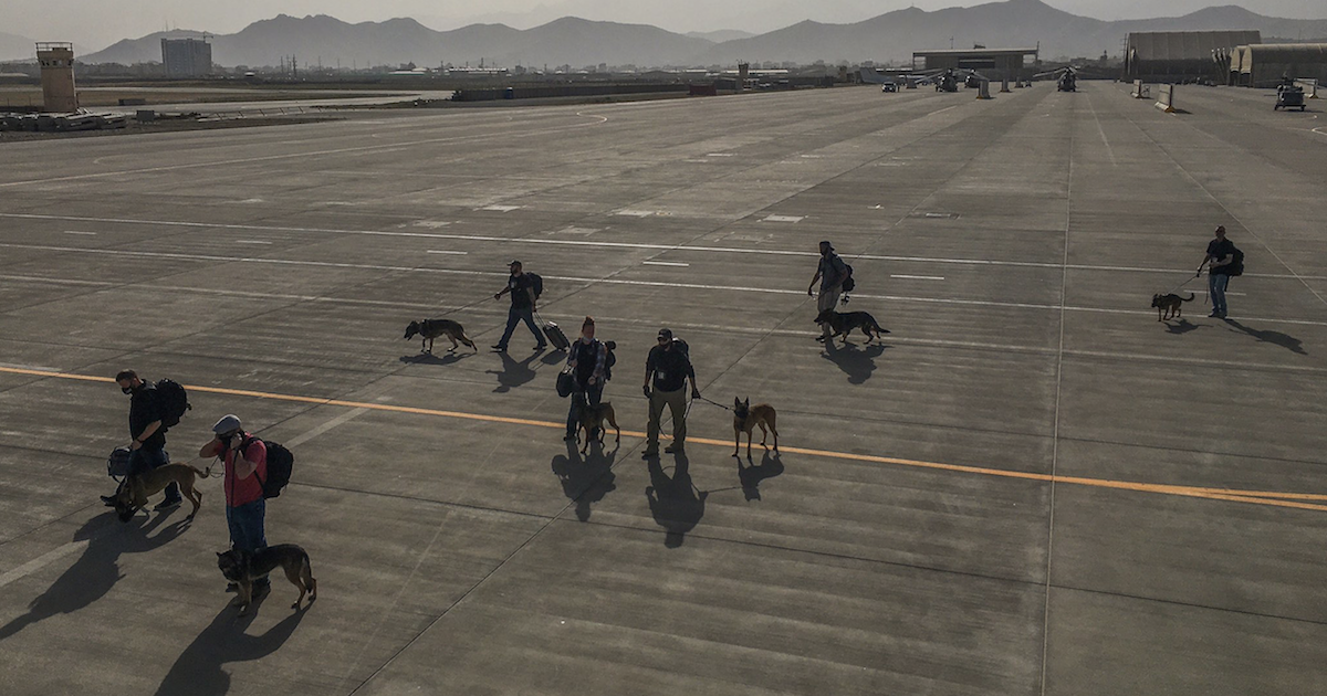 Dogs on Afghanistan plane