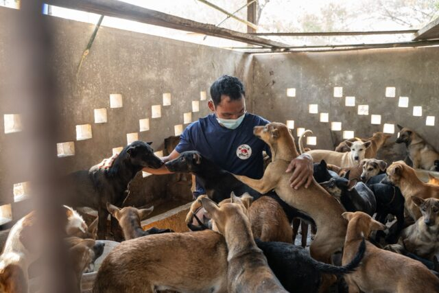 Dogs saved from meat trade