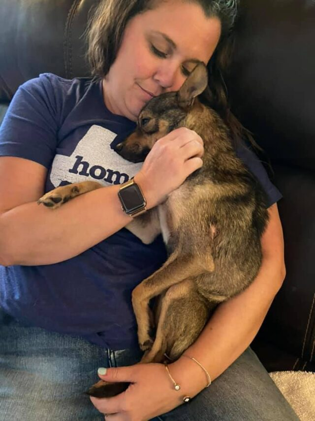 Foster dog adopted by foster family