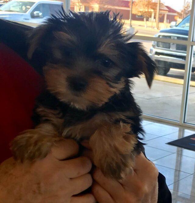 Jax as a puppy