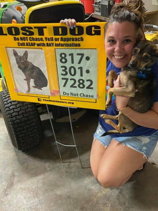 Lost foster dog found