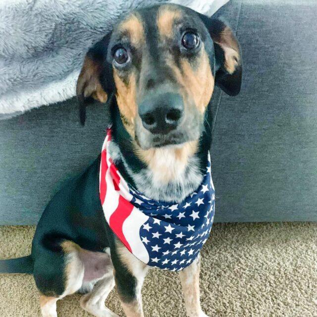 Lost rescue dog
