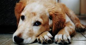 Midwestern Pet Foods Warning