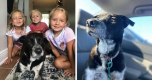 Military family gets dog back