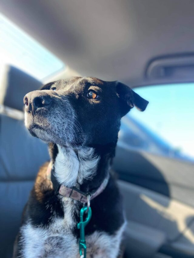 Piper long-lost dog