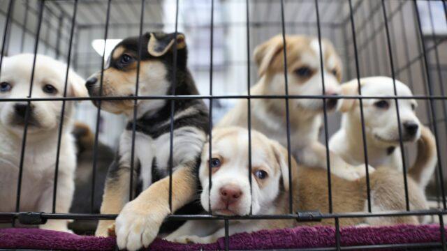 Puppies killed in Australia