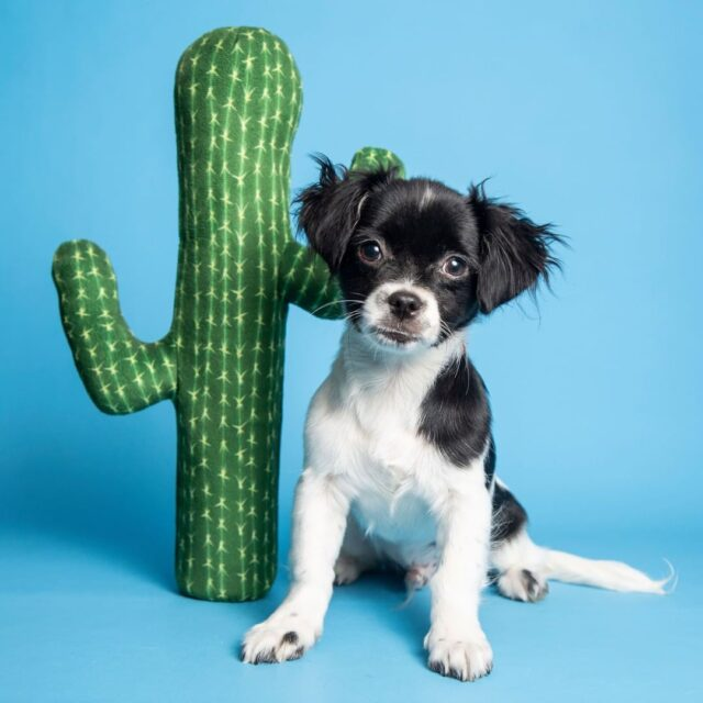 Puppy by fake cactus