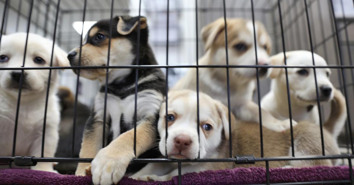 Rescue Dog Shot in Australia