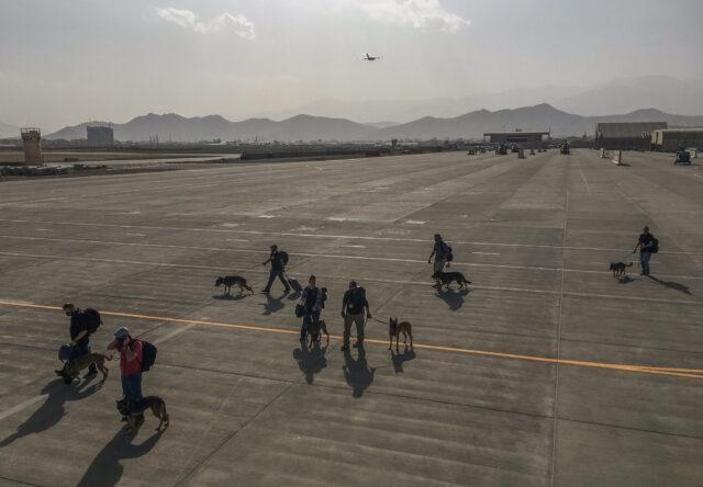 Service dogs boarding plane in Afghanistan