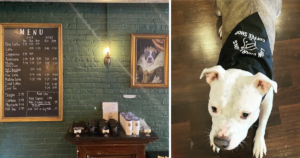 Shelter Dog Coffee Shop