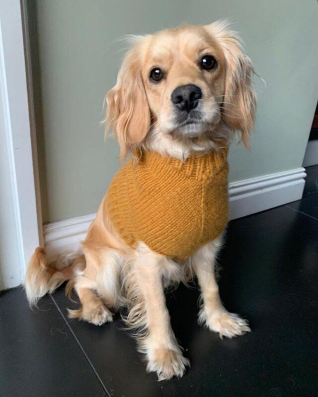 Tom Daley knitted dog jumper
