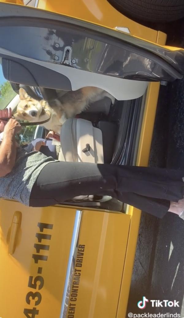 Woman and Corgi in Taxi