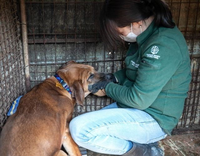 end dog meat