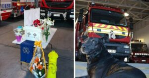 fire station dog cover
