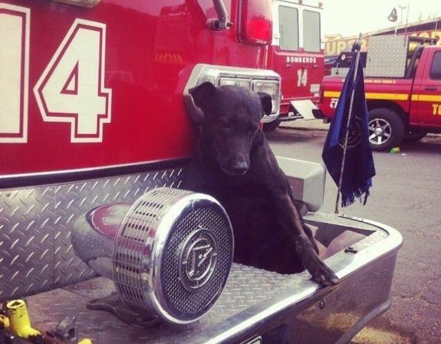 fire station dog