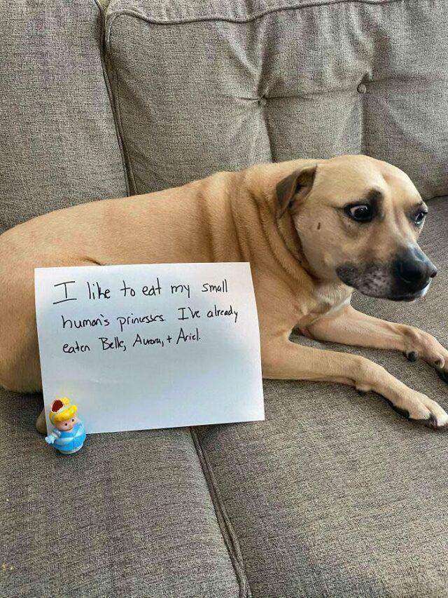 Guilty dog eats princesses