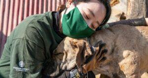 ending dog meat