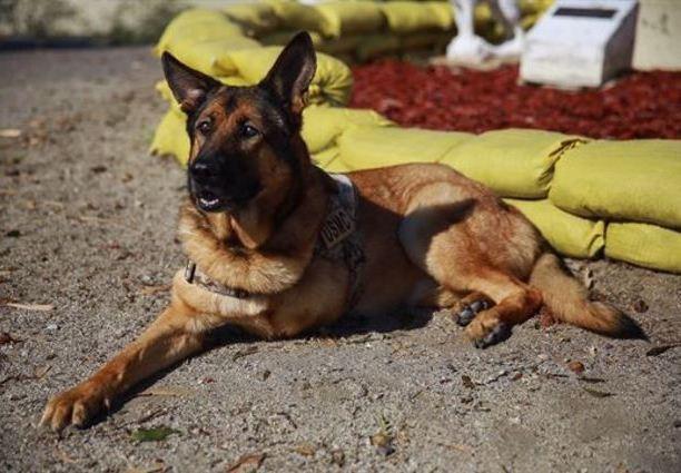 hero-dog-saves-marines