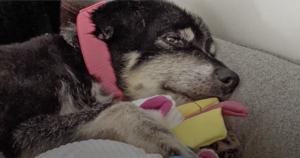 Belky senior dog