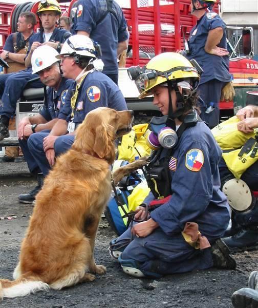 Bretagne Working Dog