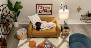 Dachshund living room