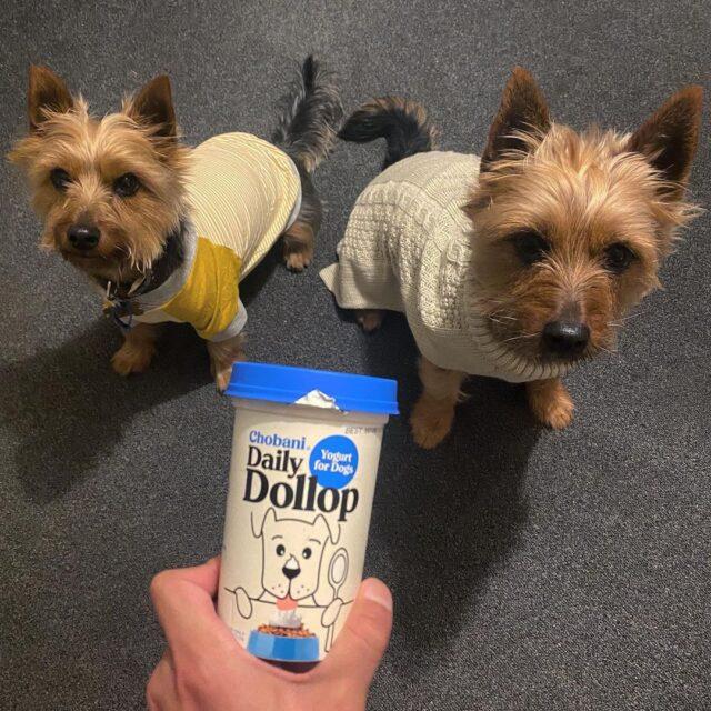 Daily Dollop Dog Yogurt