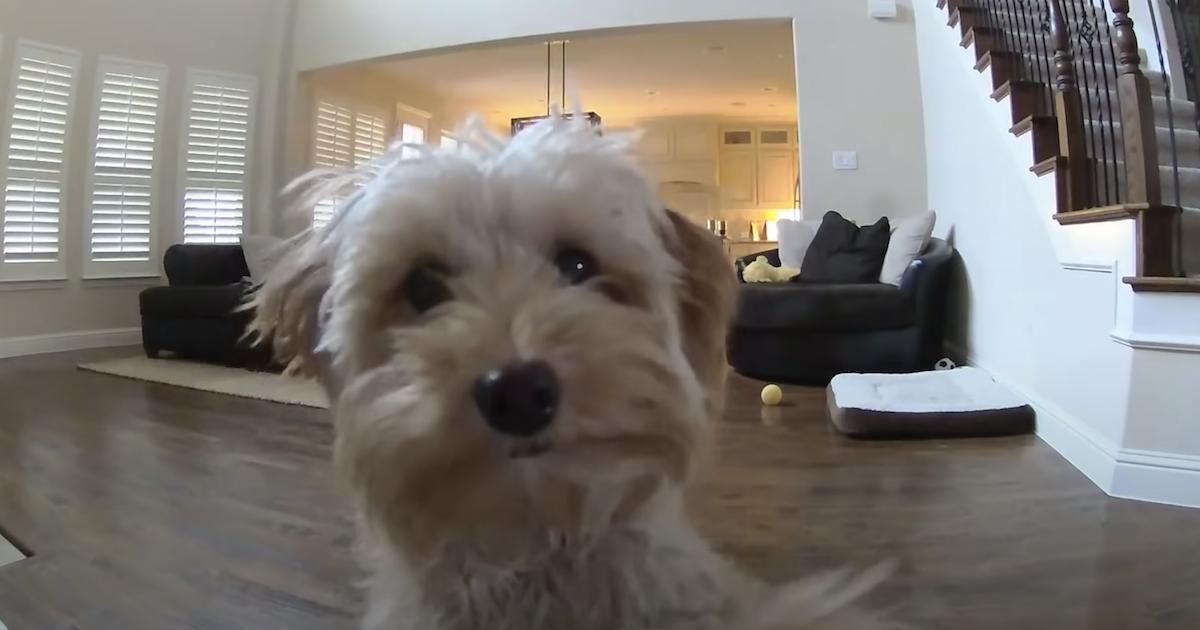 Dog kisses Ring camera