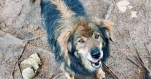 Dog Overlooked for 7 Years