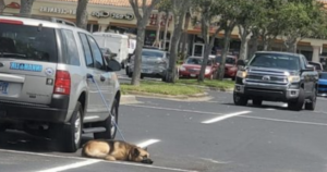 Dog Tethered to Car
