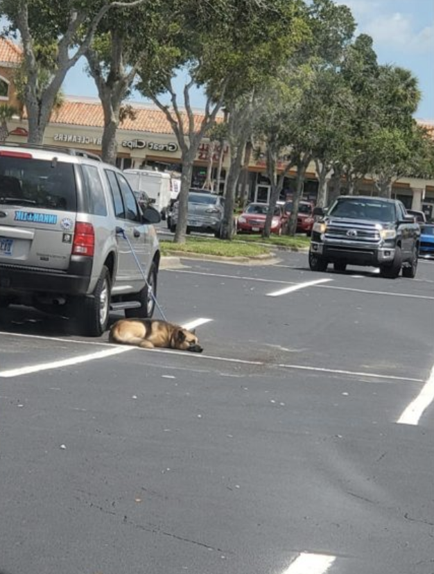 Dog Tethered to Car Handle