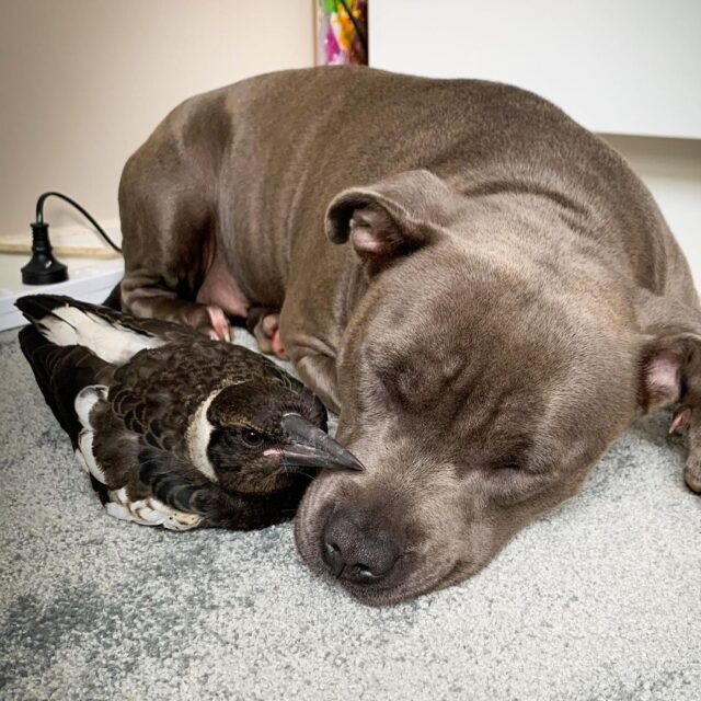 The dog and the bird are hugging.