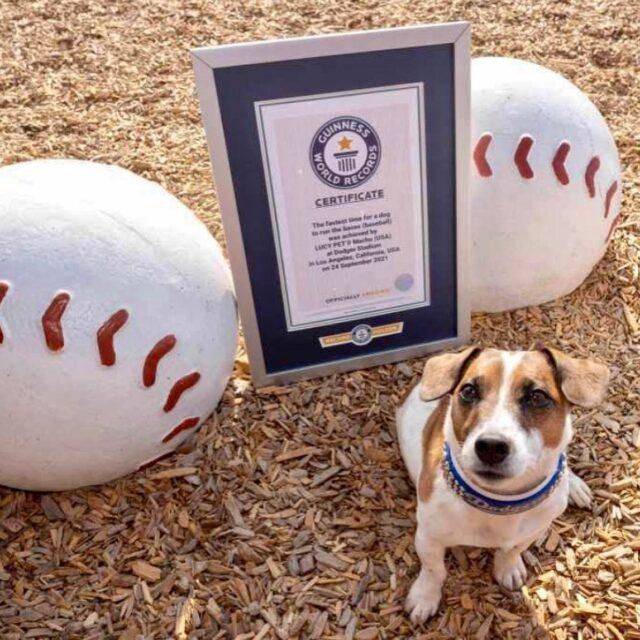 Dog home run record